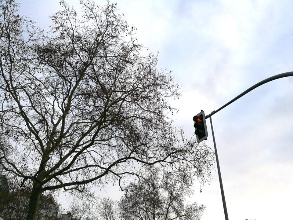 Baum, der über eine Ampel ragt