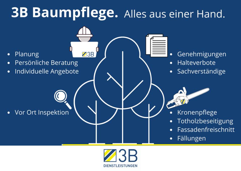 Infografik Abteilung Baum 3B Dienstleistungen